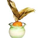 petit-verre-fruta